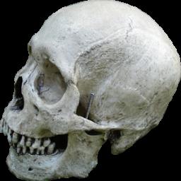 Череп человека (Skull Human)